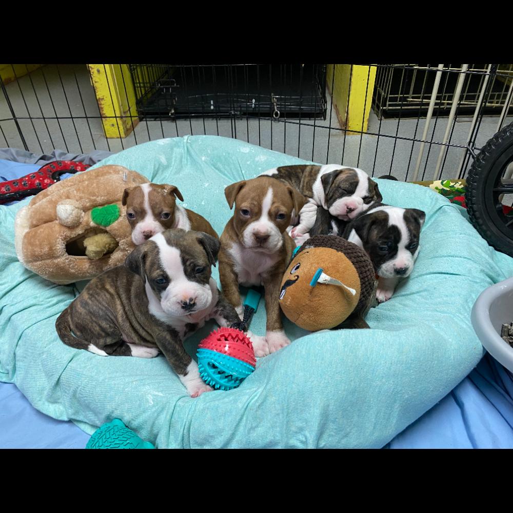 Love Puppy Brunch