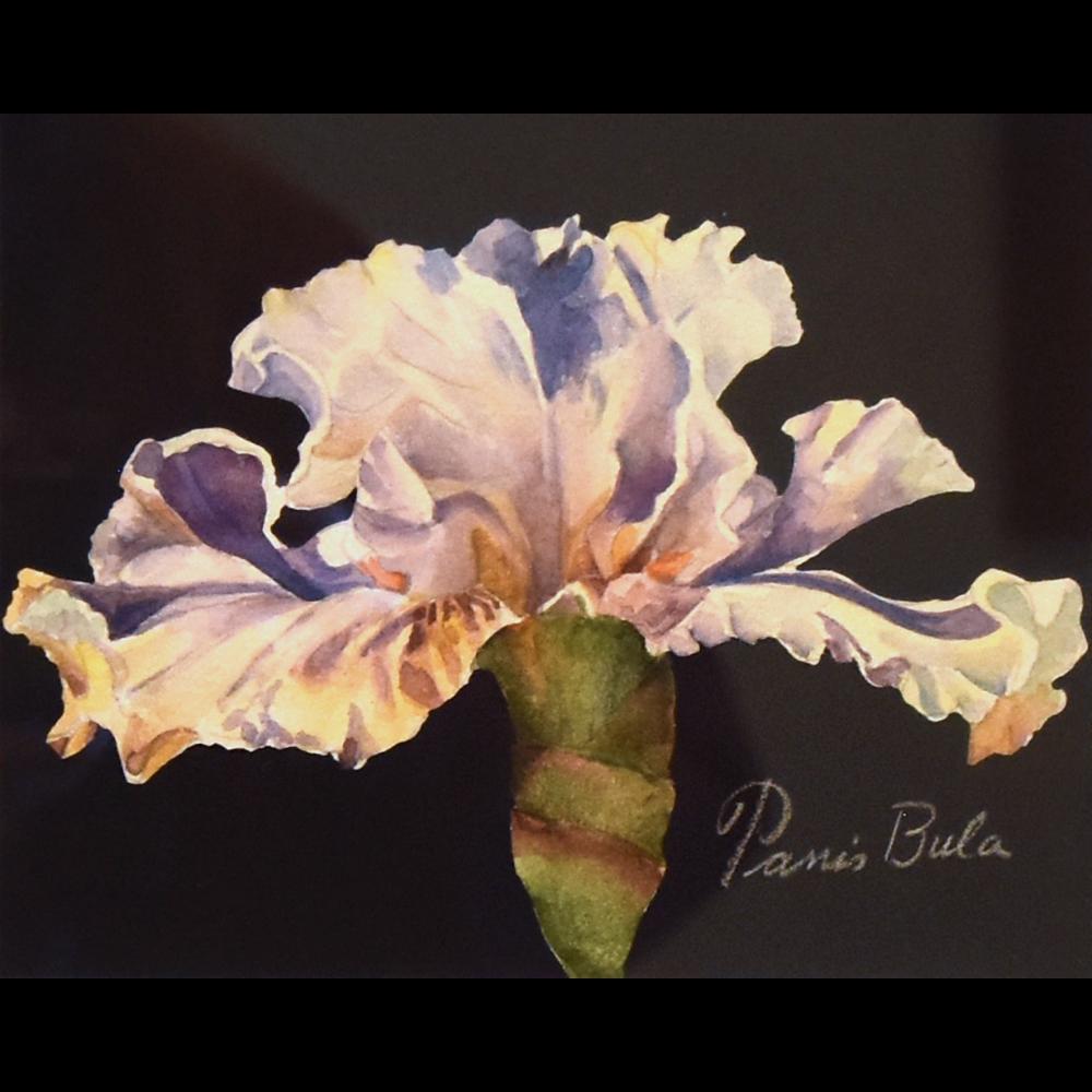 Ruffled Delight II, Blue Iris