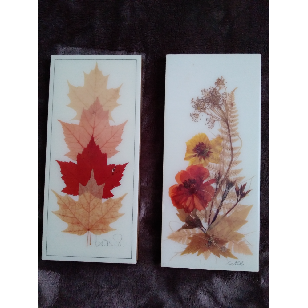 Preserved Leaves/Flowers Print