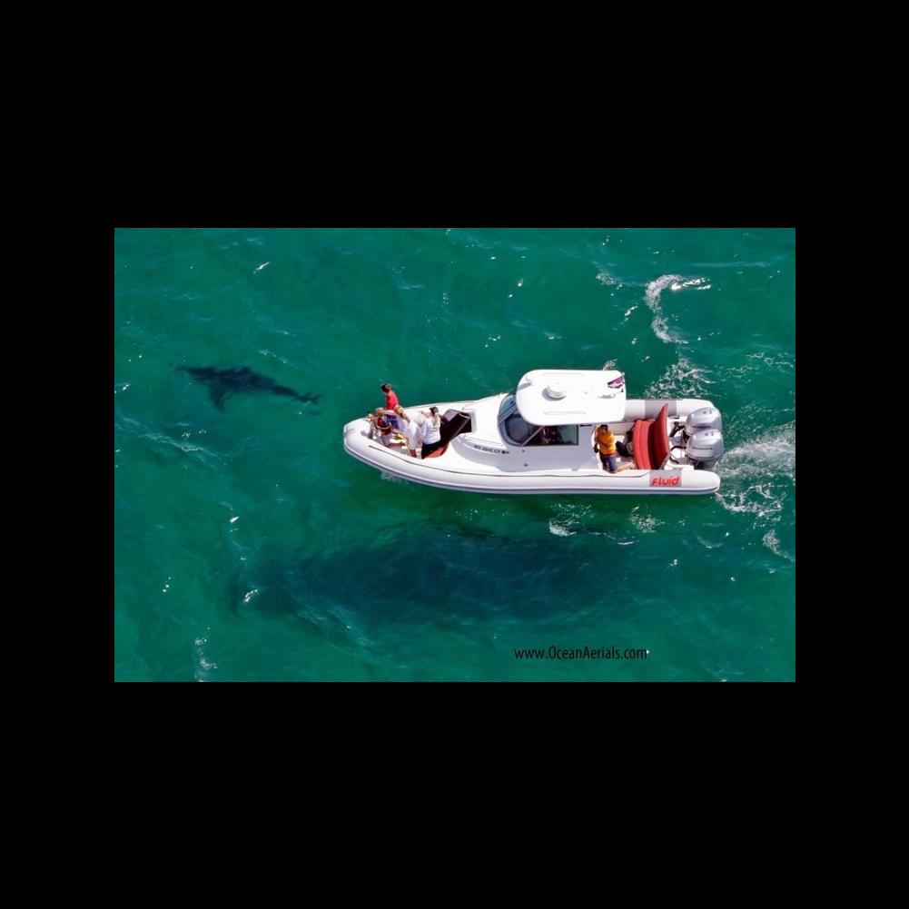 Shark Spotting Tour