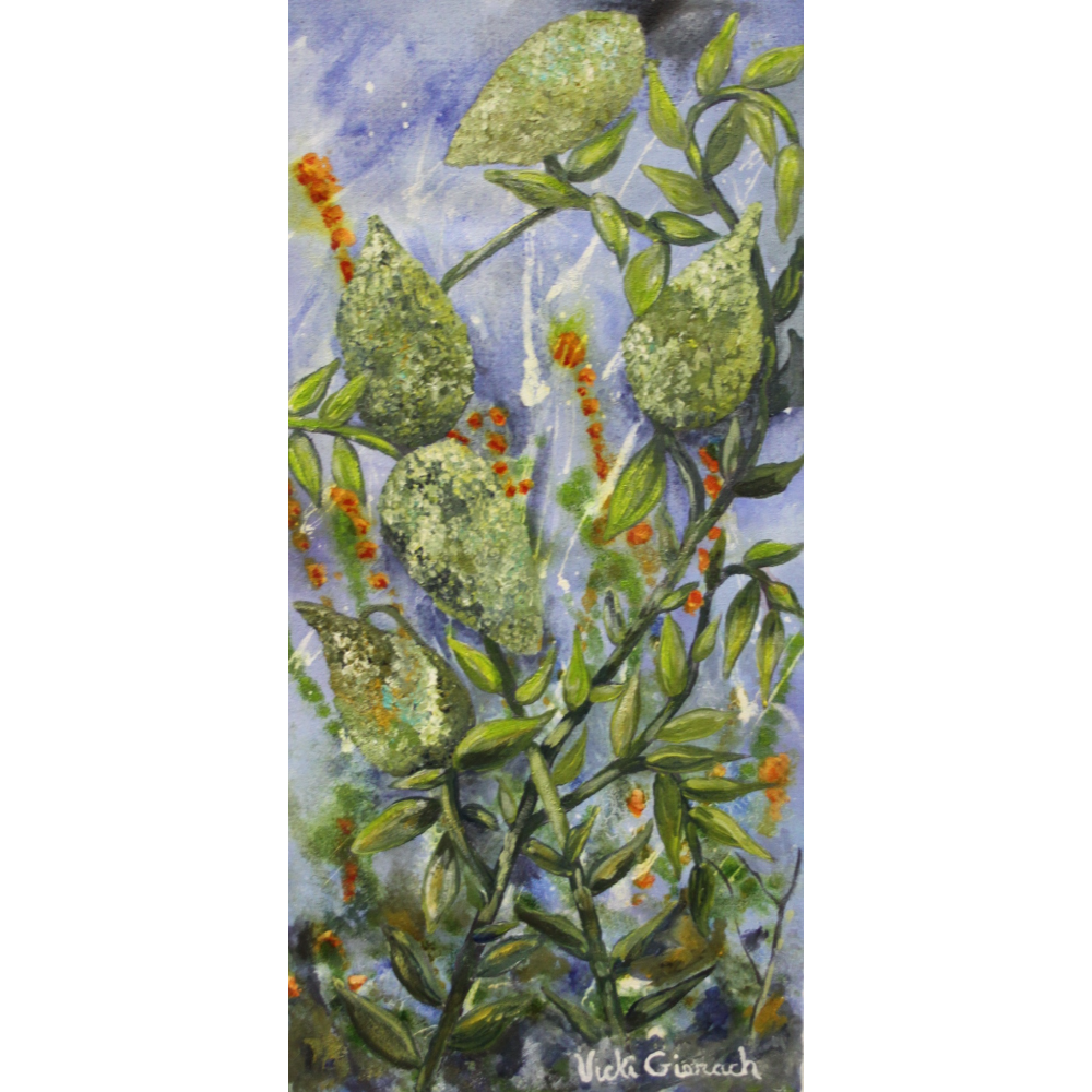 Milk Weed Pods by Vicki Gierach