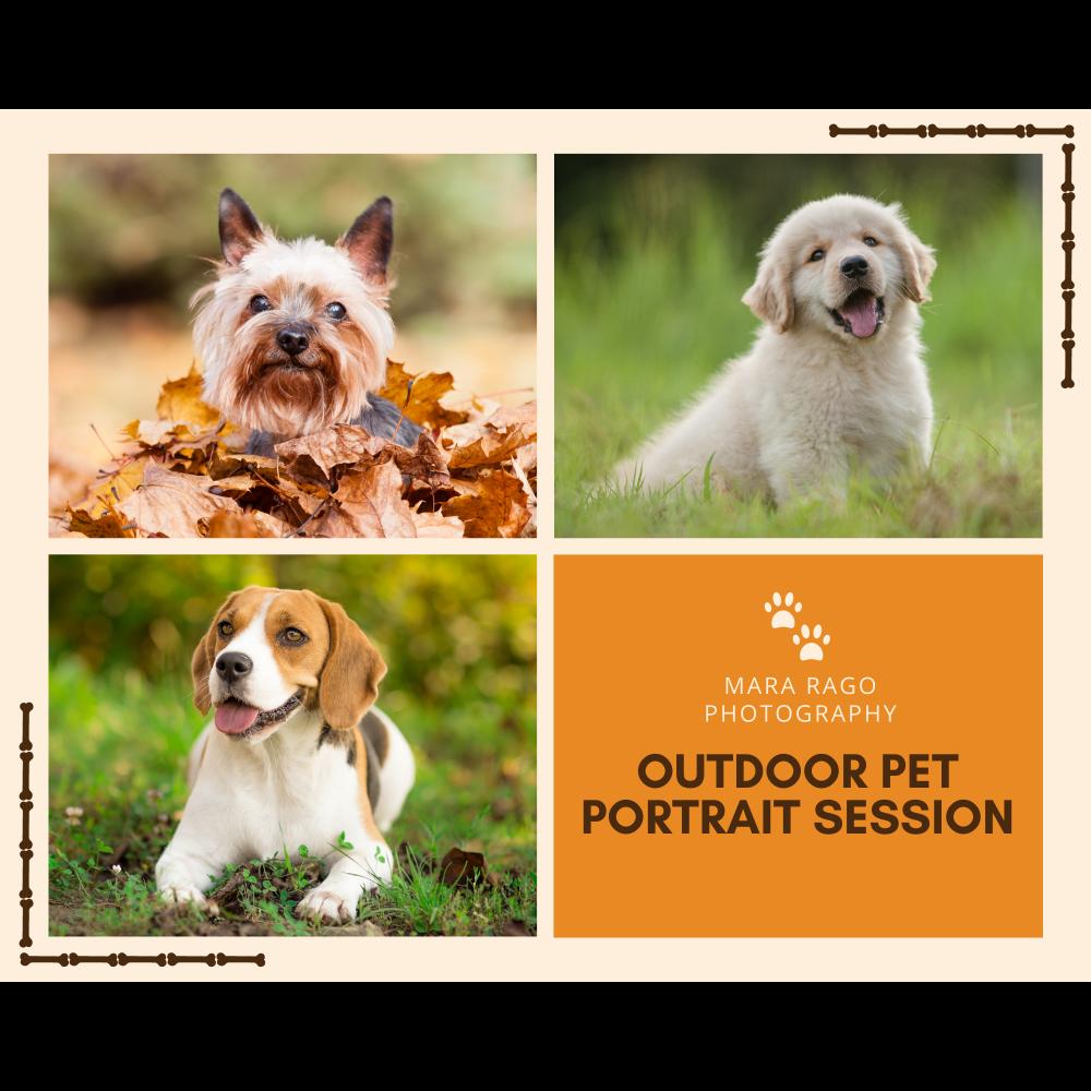 Pet Portrait Session