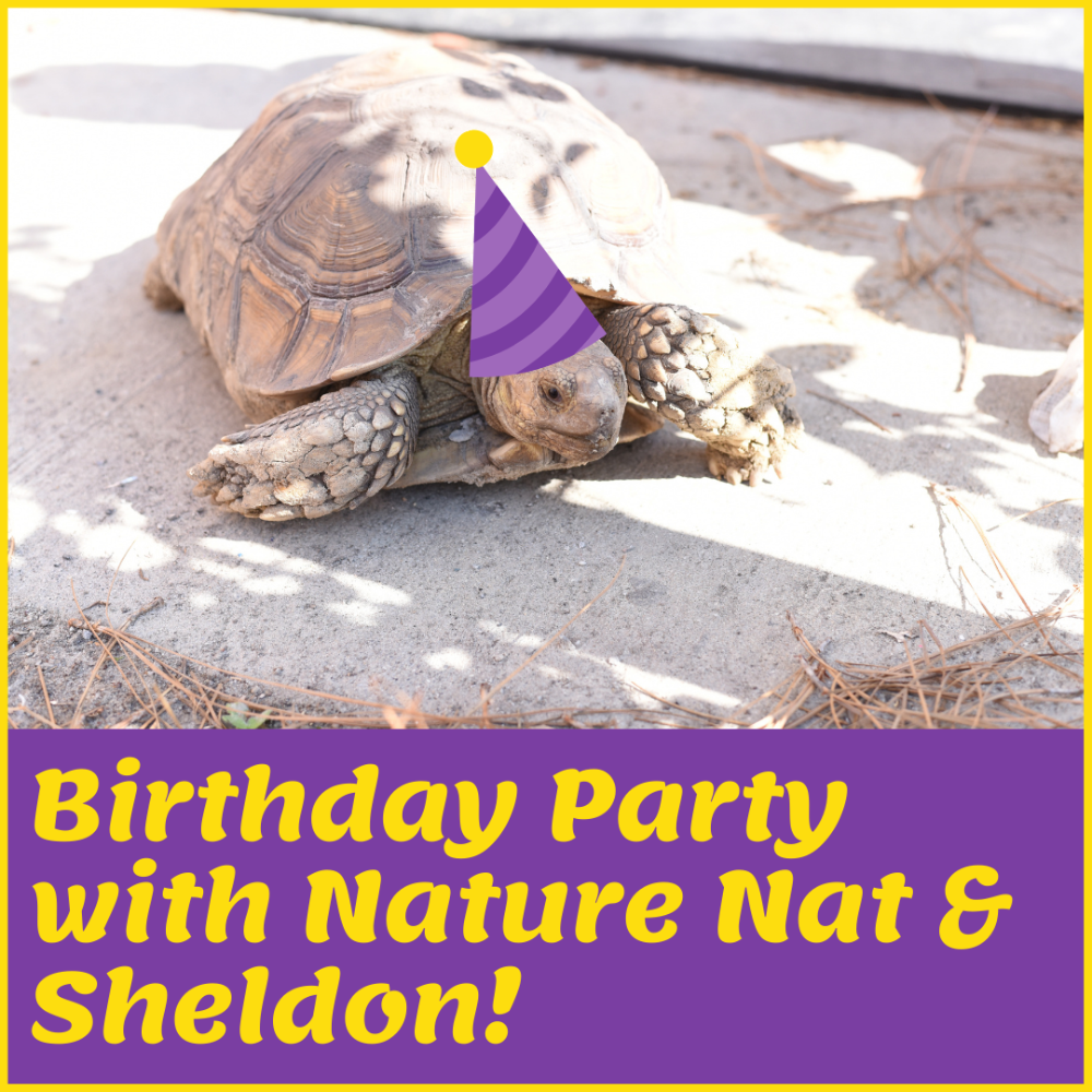 Reptile Center Party with Nature Nat