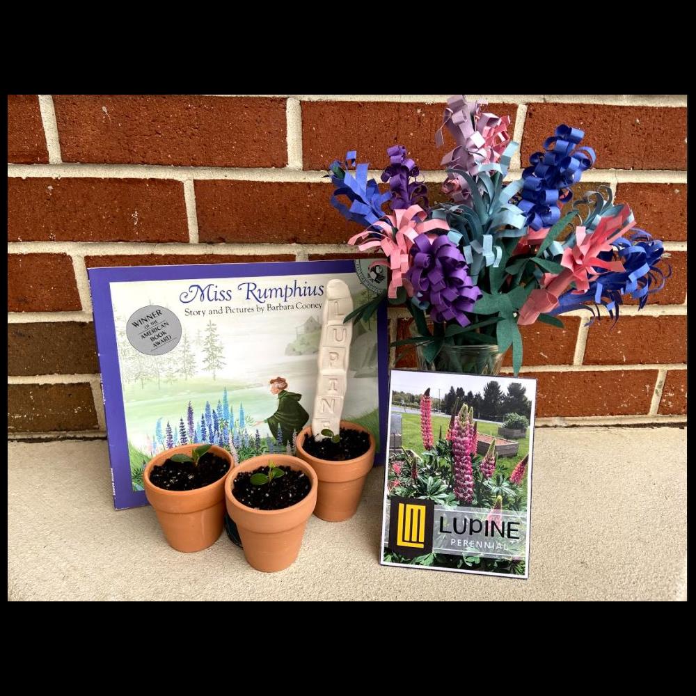 Lupine Garden Bundle from ND 3rd Grade