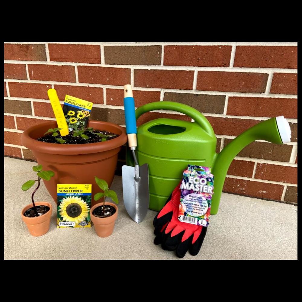 Sunflower Garden Bundle from ND 3rd Grade Class