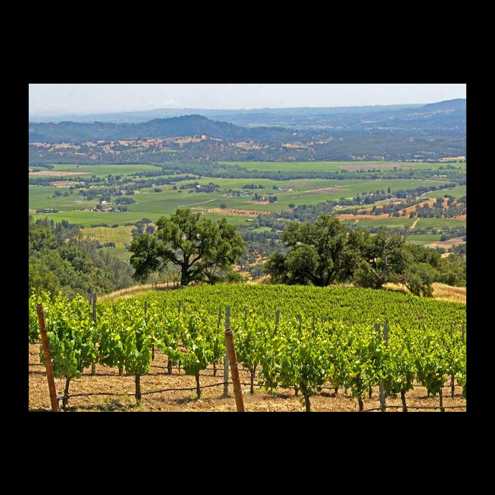 Alexander Valley Wine Region Insider's Tour