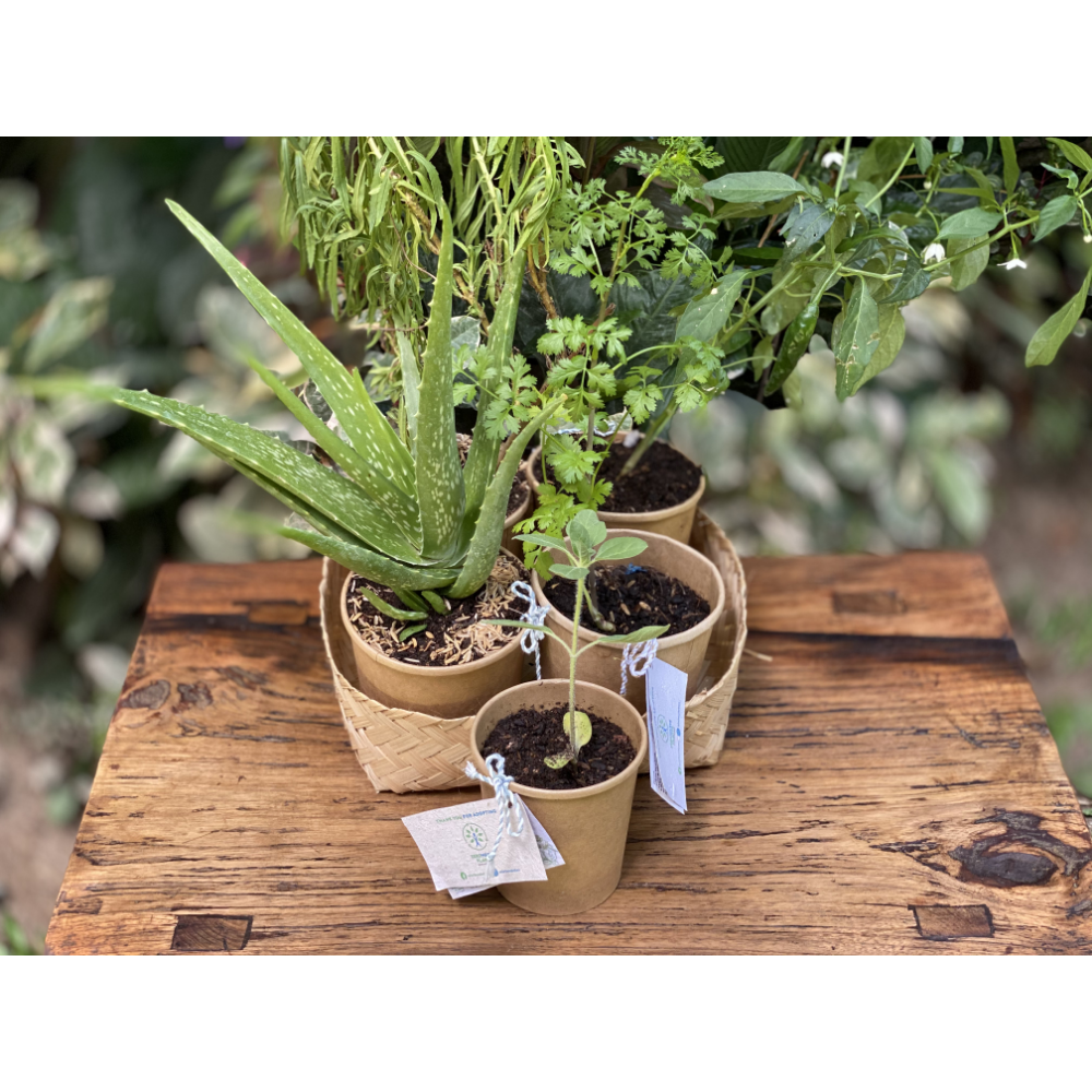 ZeroWaste Plants