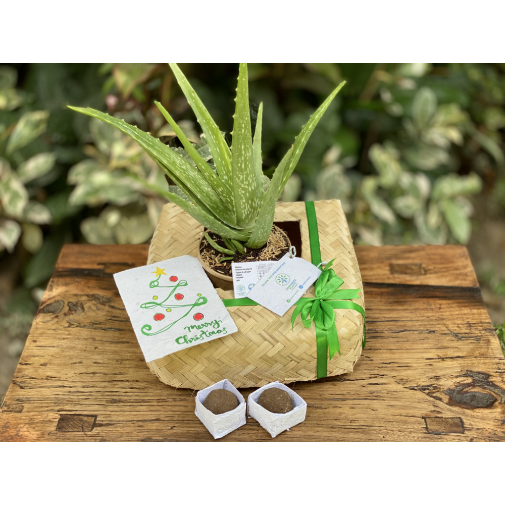 Go-green-package for your kitchen or garden