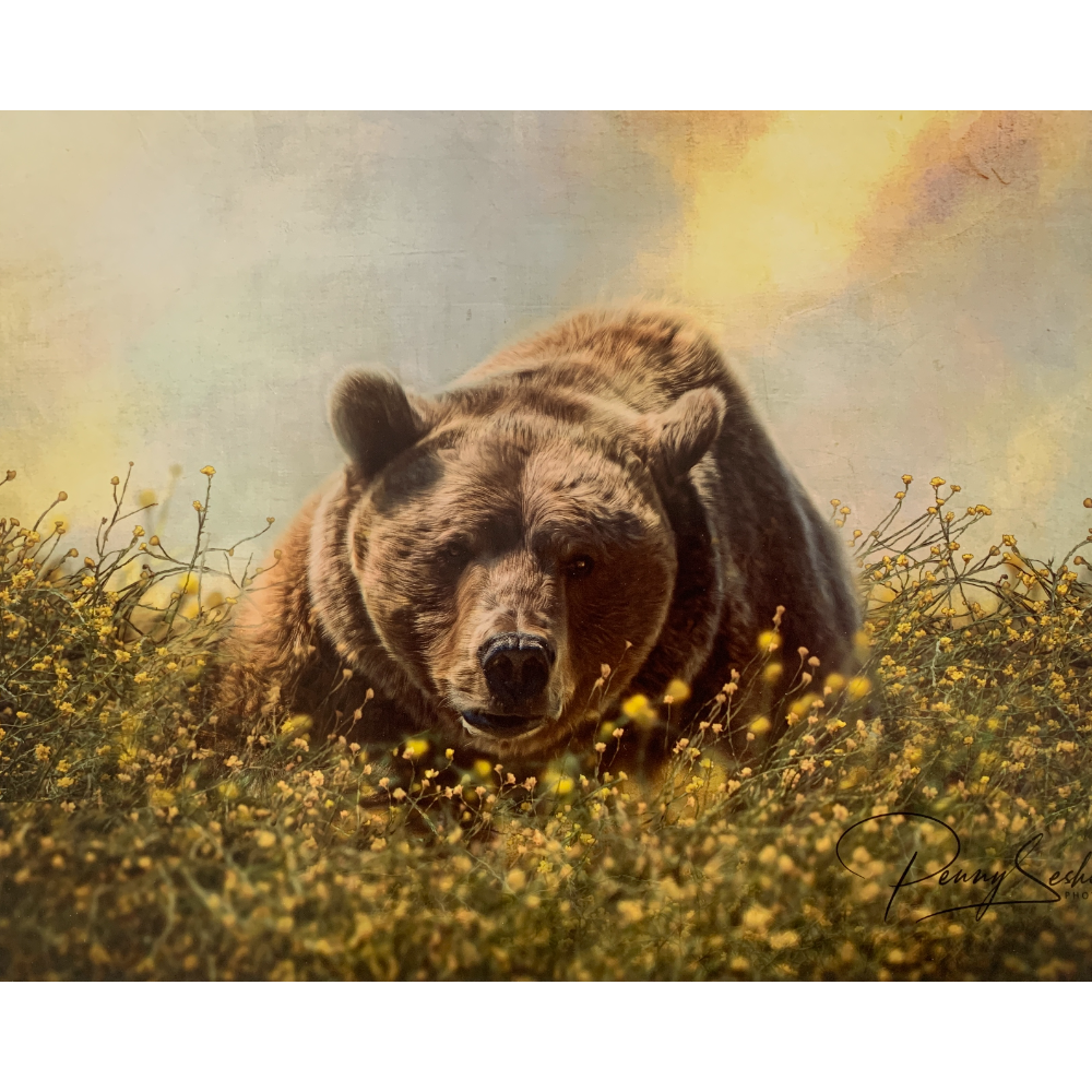 """(11""""x14"""")  Large Double Mounted Image of Bam Bam the Grizzly Bear Laying in Flowers at TCWR"""